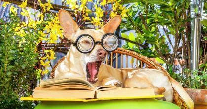 Hund mit Text und Brille
